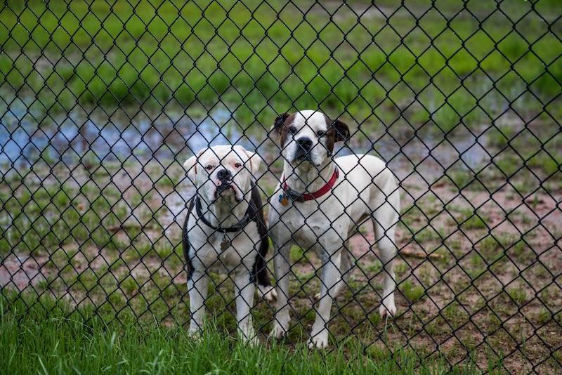 Koirat päiväkodissa
