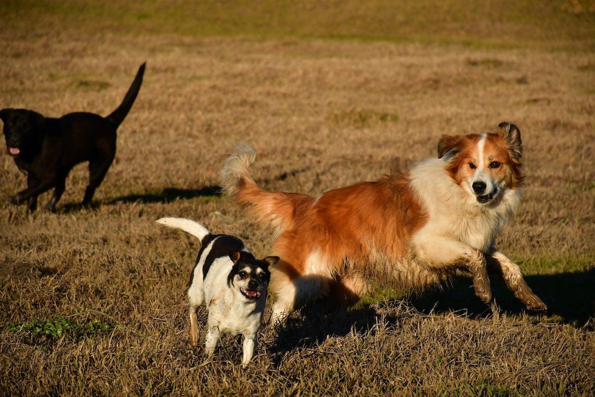 Kolme erilaista koiraa