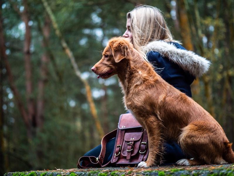 Koirat ja nainen metsässä